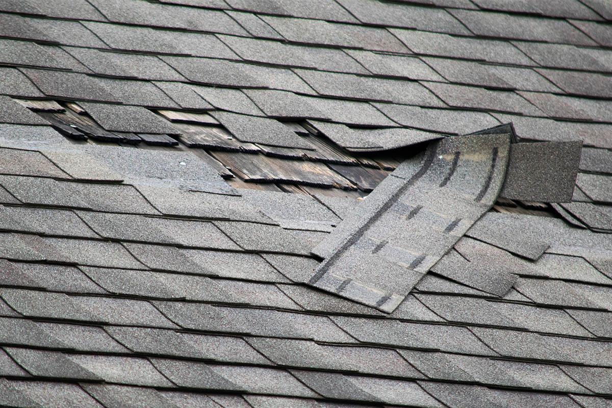 damaged roof shingles needs repair